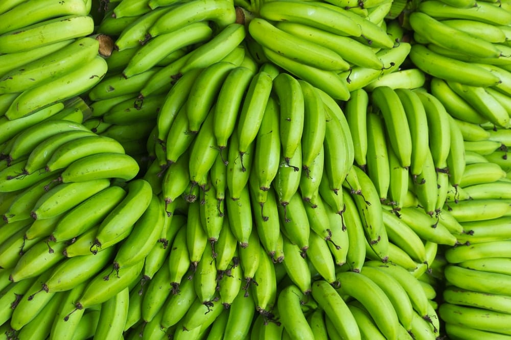 Different Variable Effects on Ripening Green Bananas