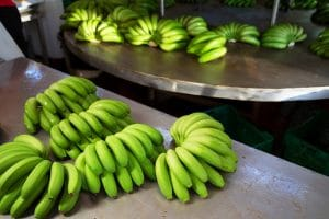 Use Banana Bunkers