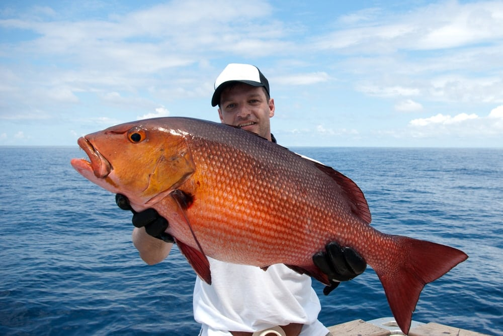 What Does Red Snapper Taste Like