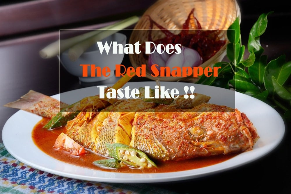 What Does The Red Snapper Taste Like